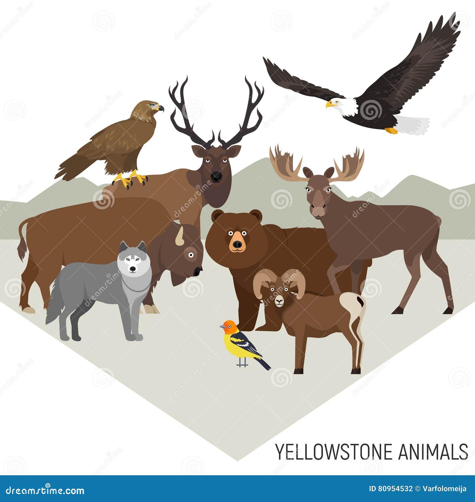 Yellowstone Nationalpark Tiere Vektor Abbildung ...
