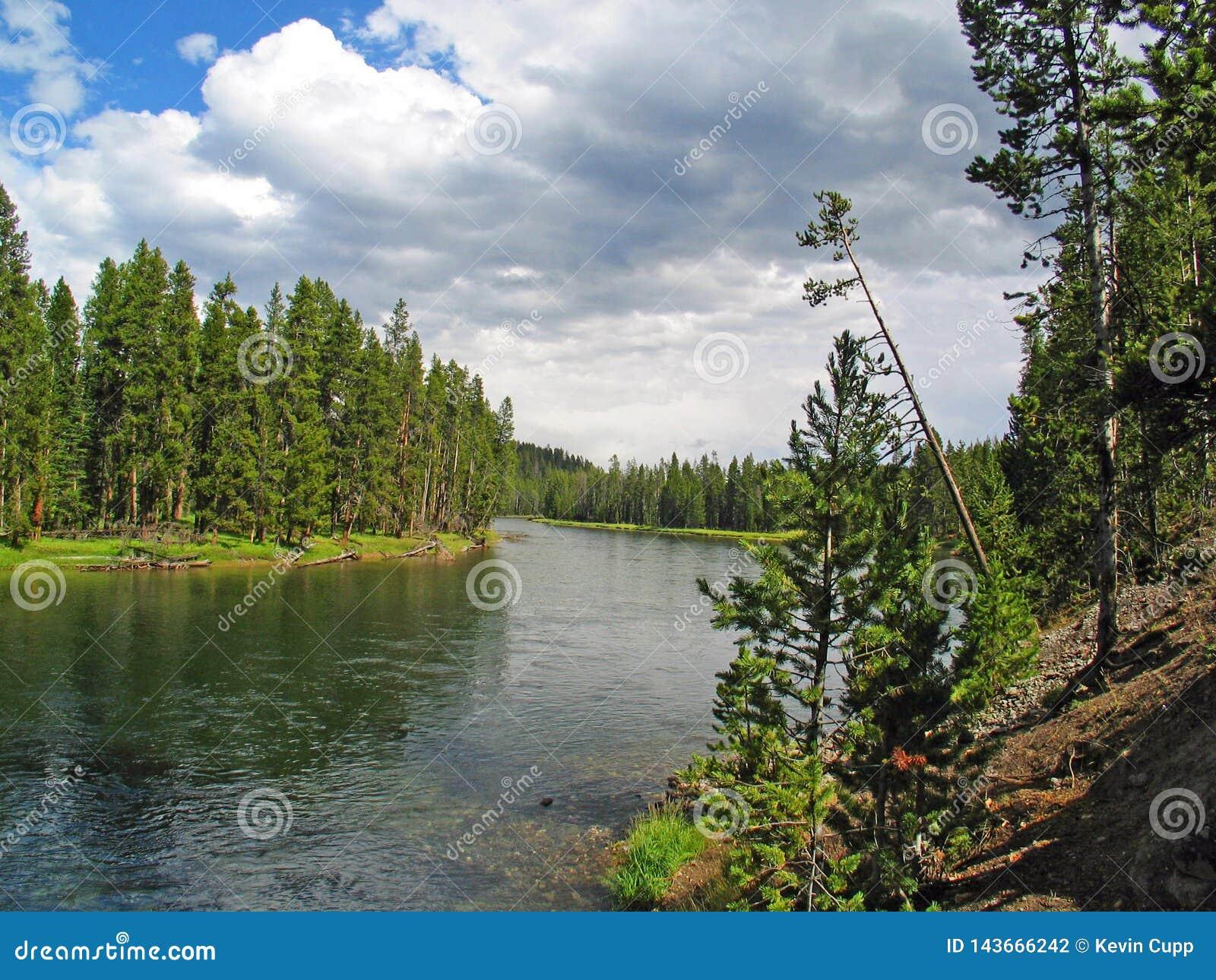 Yellowstone Rzeczny przyglądający z powrotem Yellowstone jezioro