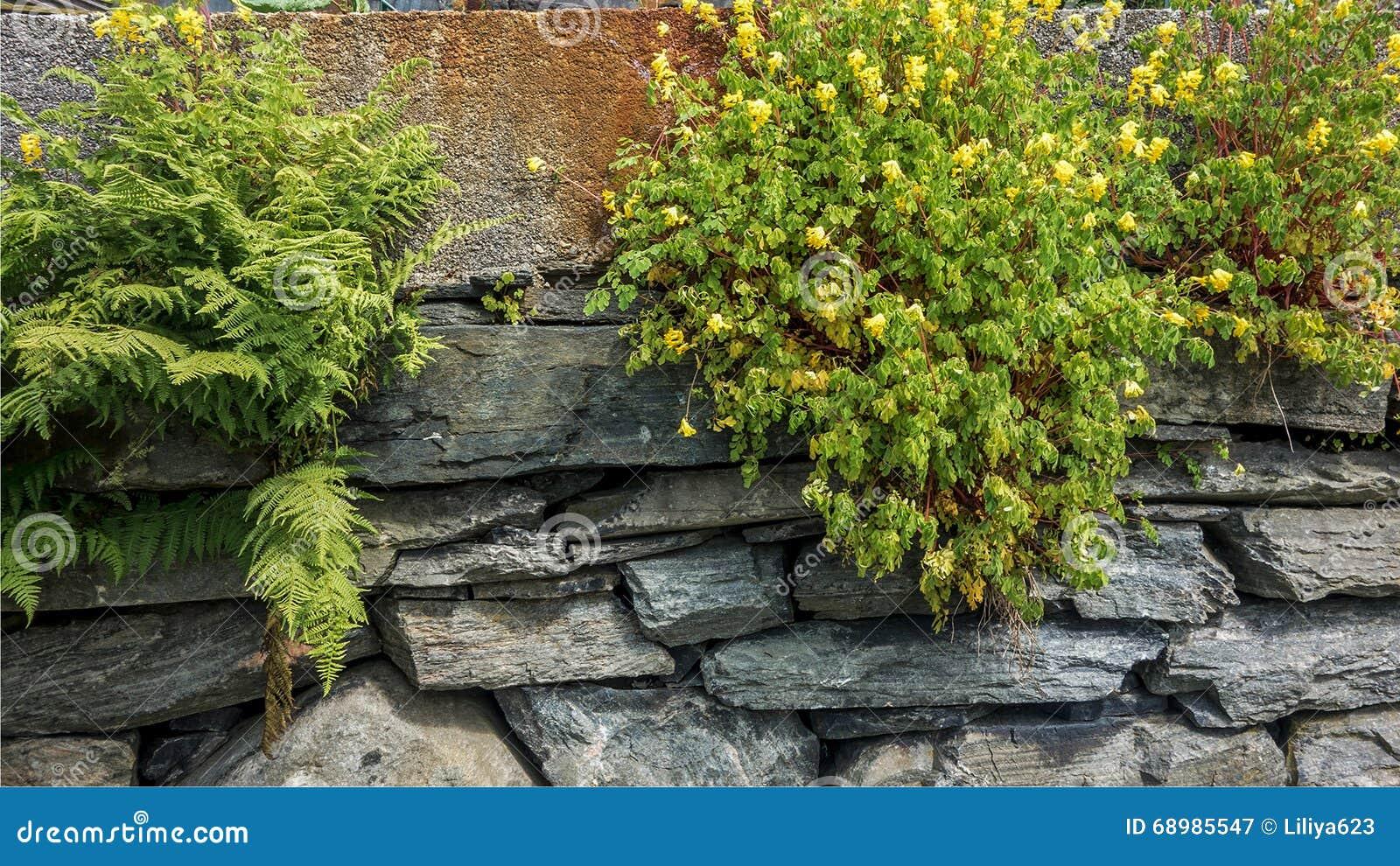 Yelloy kwiaty na kamiennej ścianie i paproć