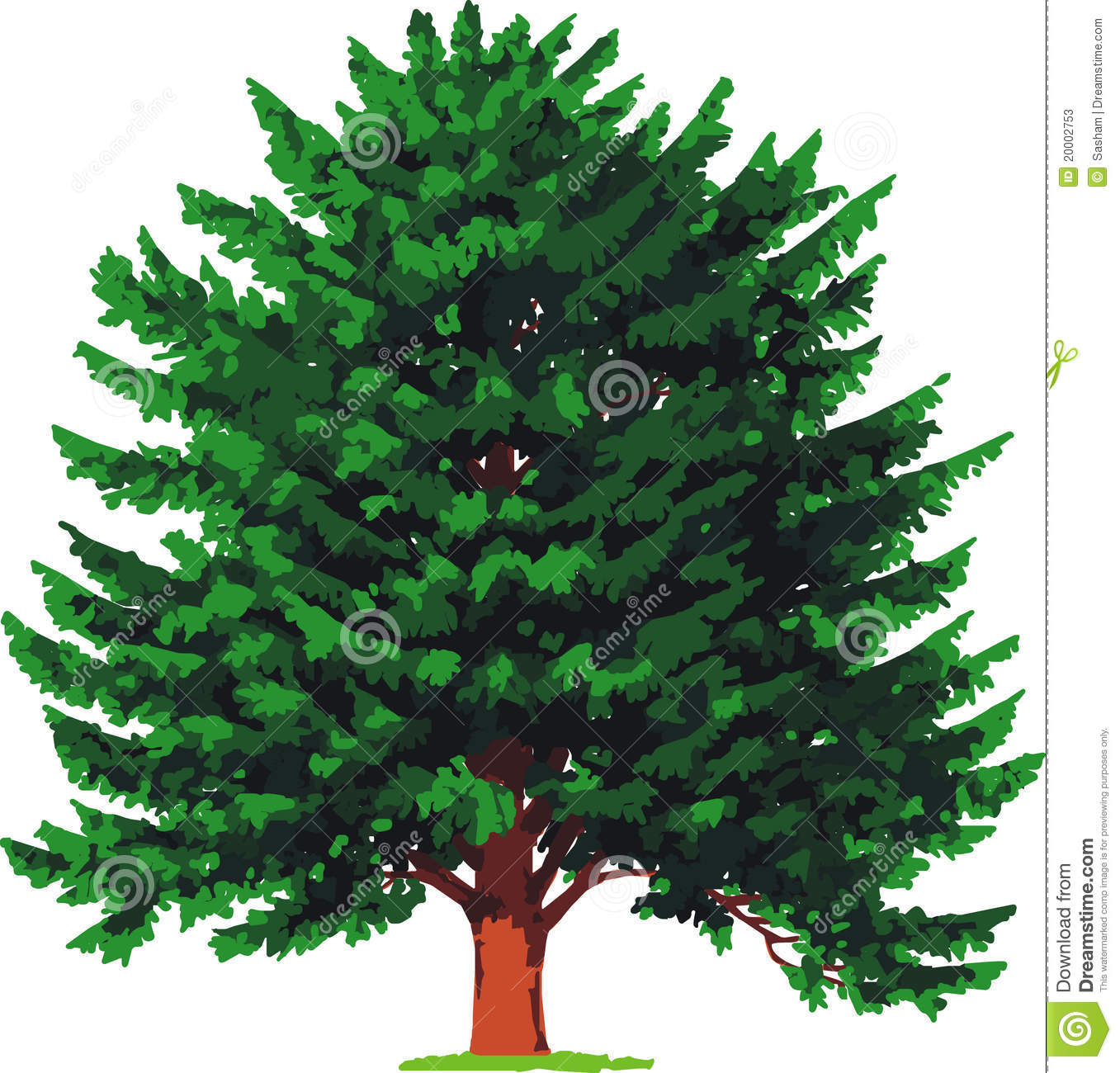 Spruce Tree Clip Art Yew tree. vector stock photos