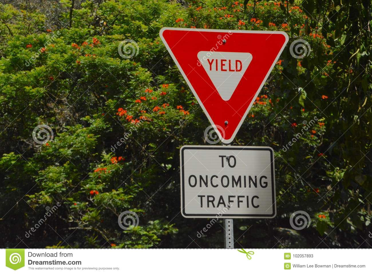 Yield Sign stock image  Image of slow, caution, hawaii