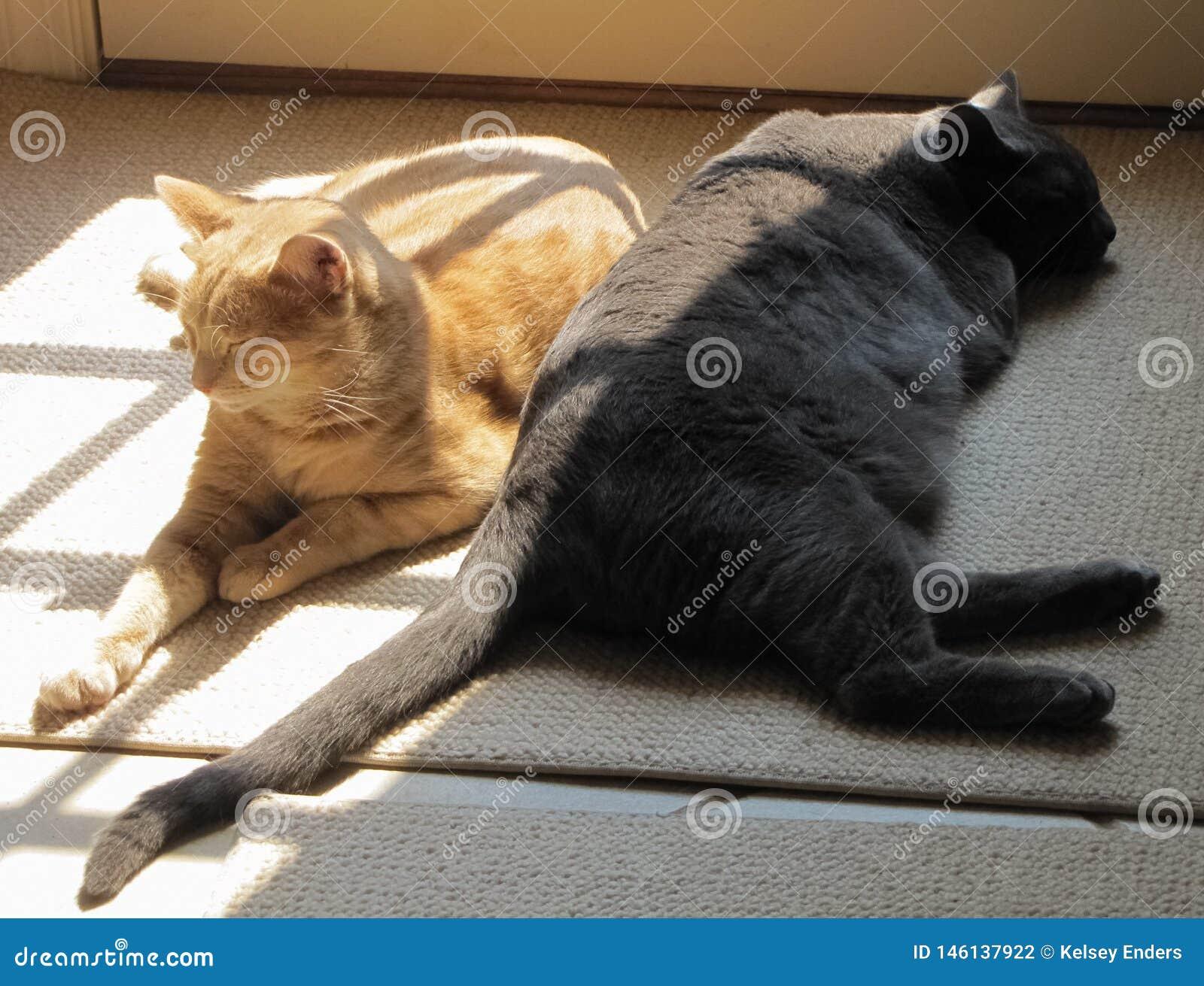 Yin e Yang Cats no Sun