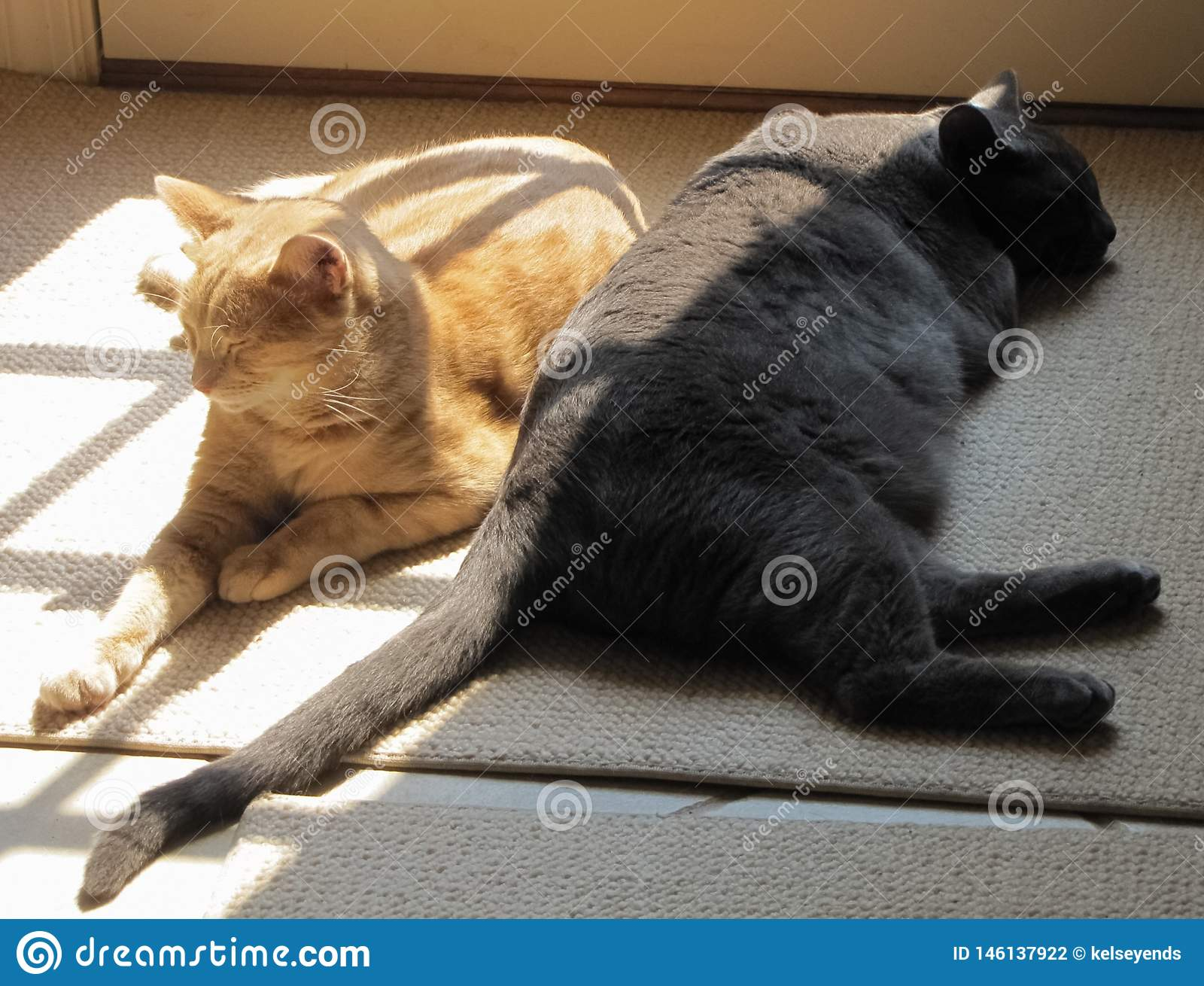 Yin and Yang Cats in the Sun