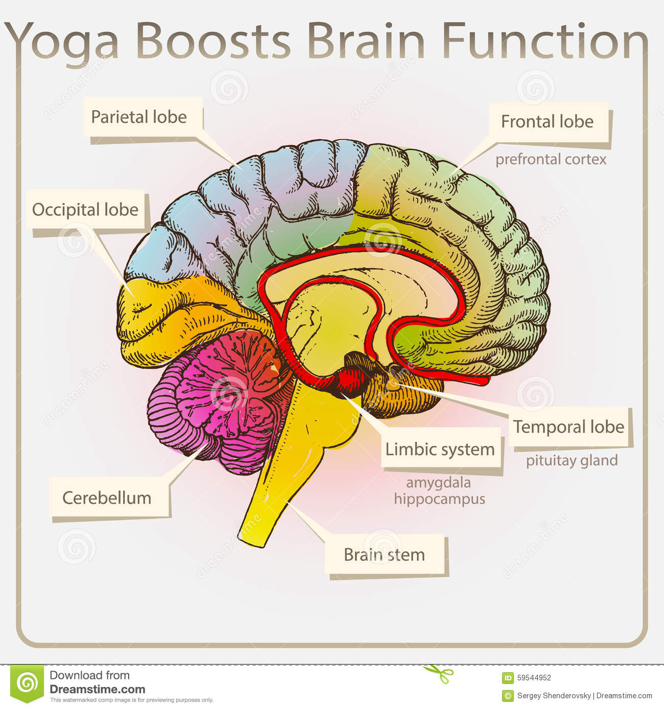 Yoga Boosts Brain Function Stock Vector Illustration Of Abstract