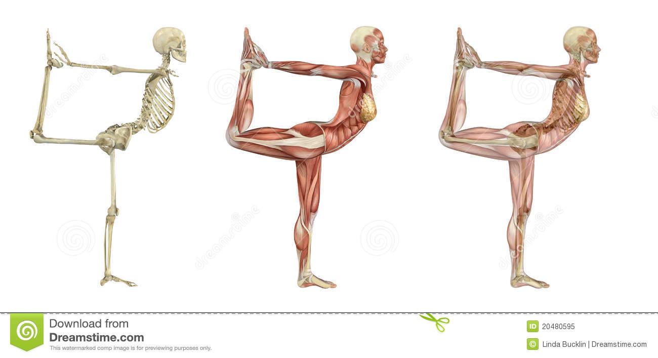 Yoga Dancer Pose - Anatomical Overlays Stock Illustration ...