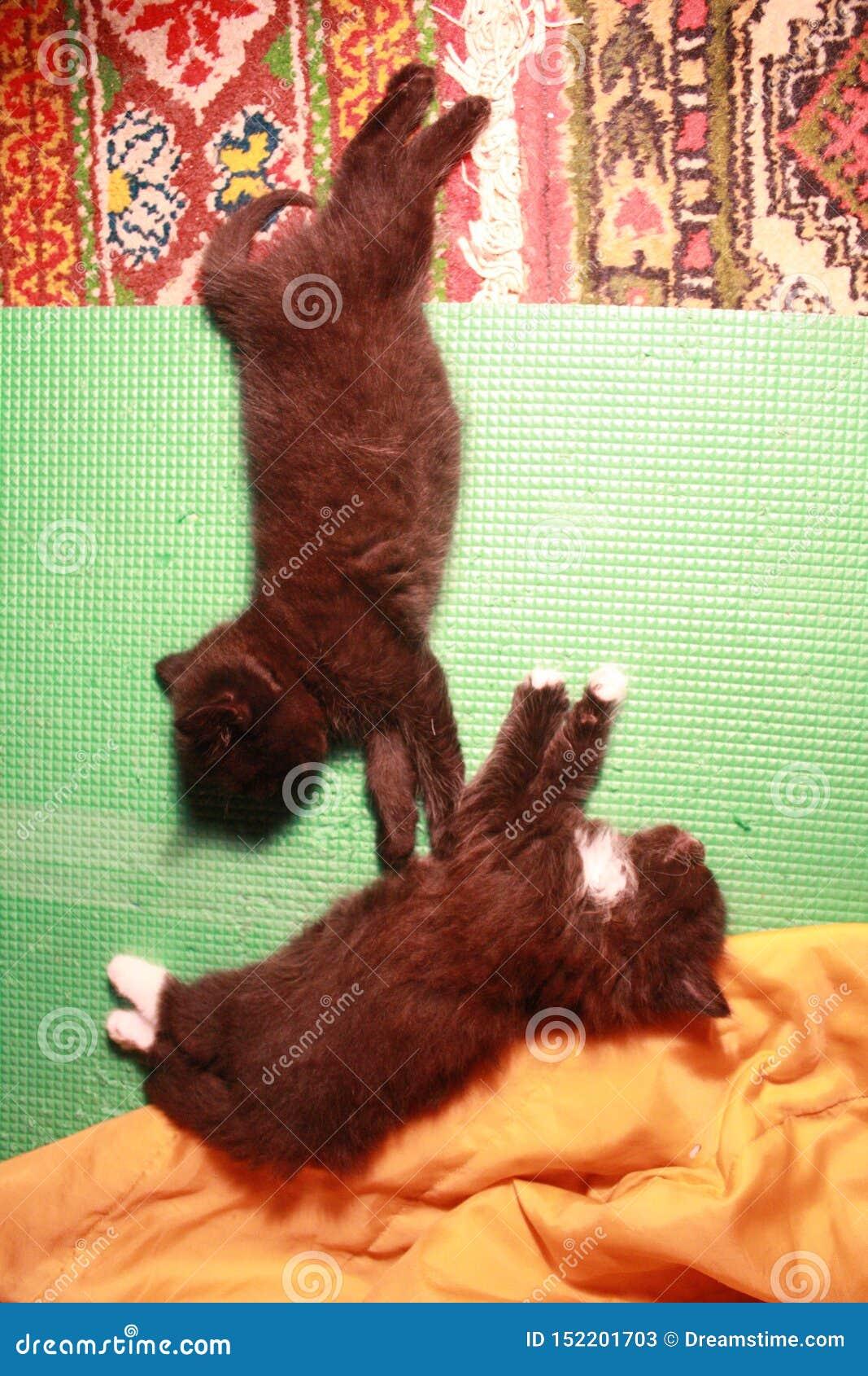 Yoga dei gattini