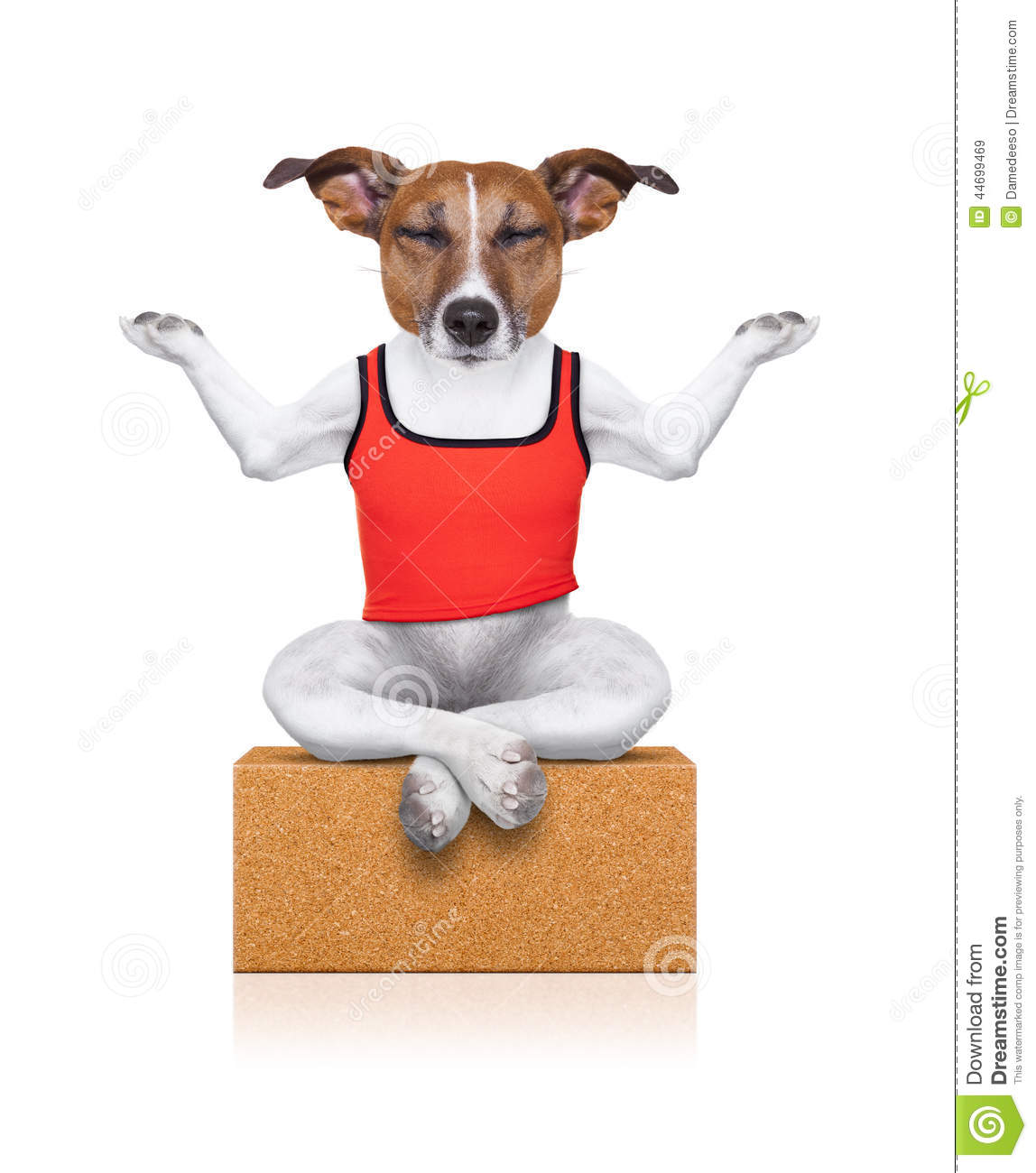 Dog sitting relaxed with closed eyes on a yoga brick isolated on