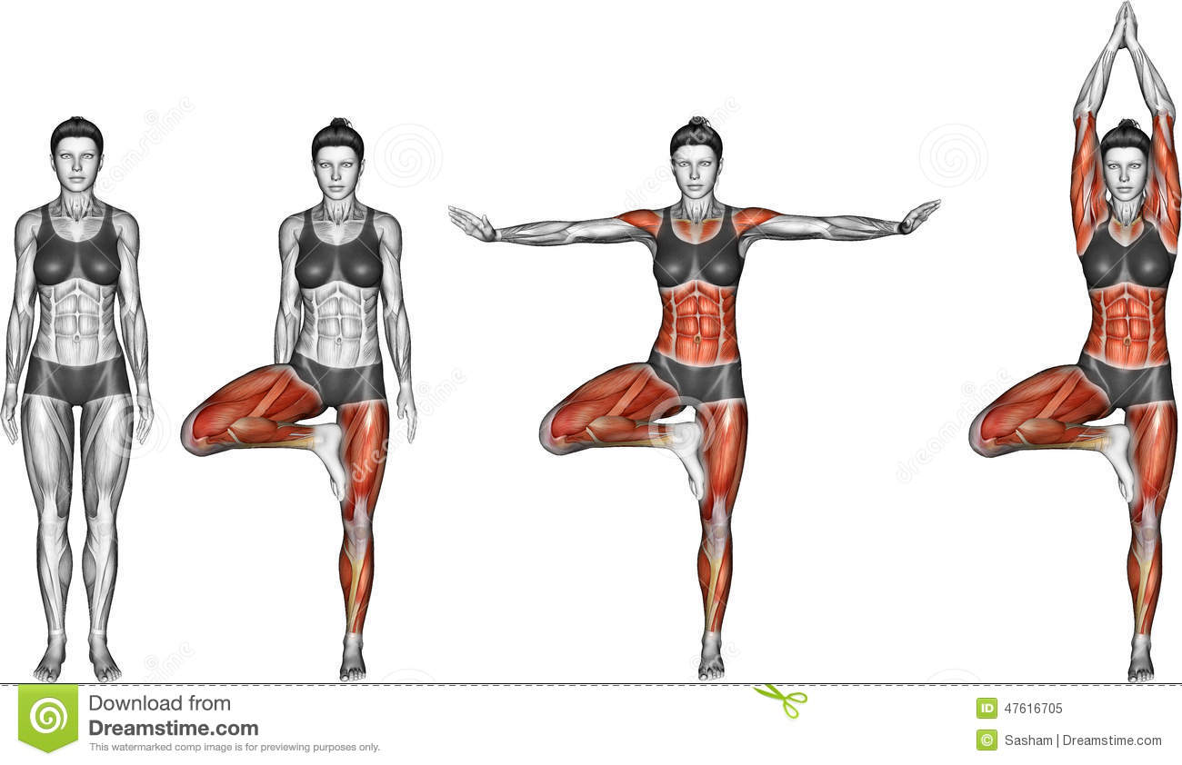 Yoga Exercise. Tree Pose. Vrksasana. Female Stock Illustration - Image ...