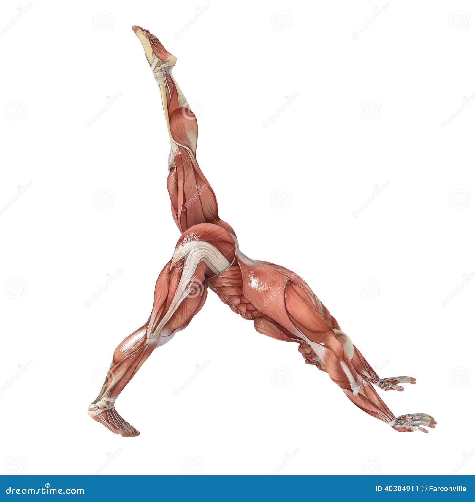 Yoga stock illustration. Illustration of nipple, human - 40304911