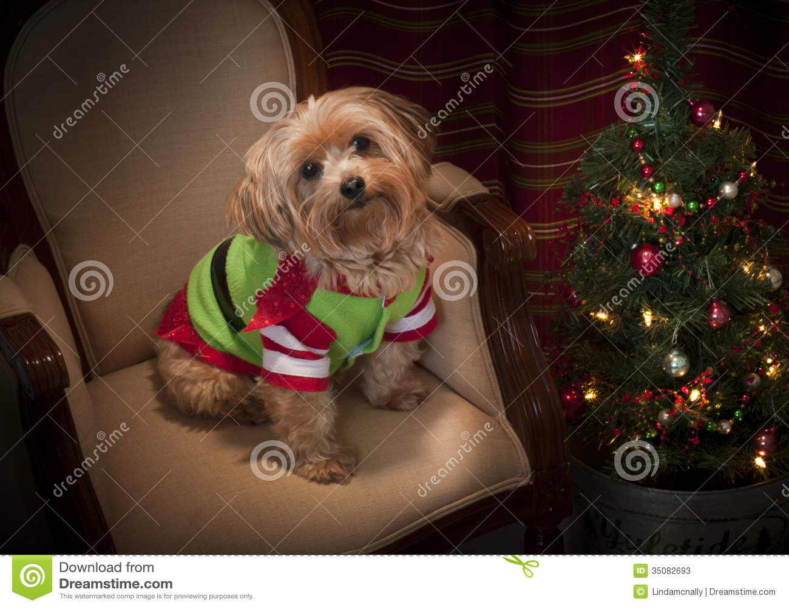 Yorkie Christmas Tree