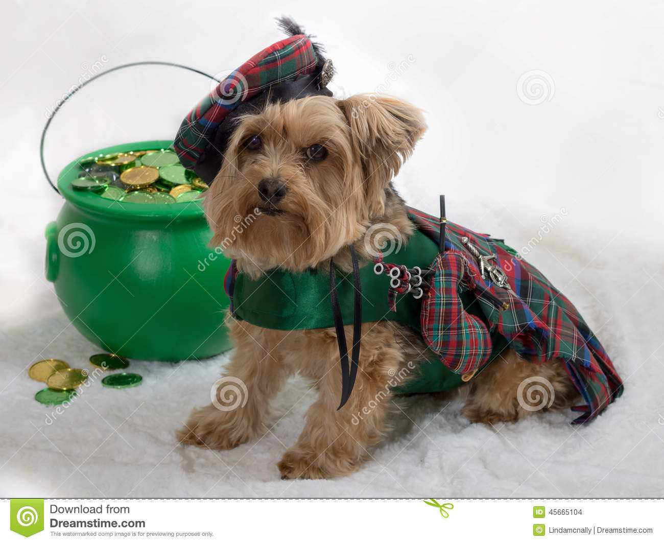 Kilts For Small Dogs