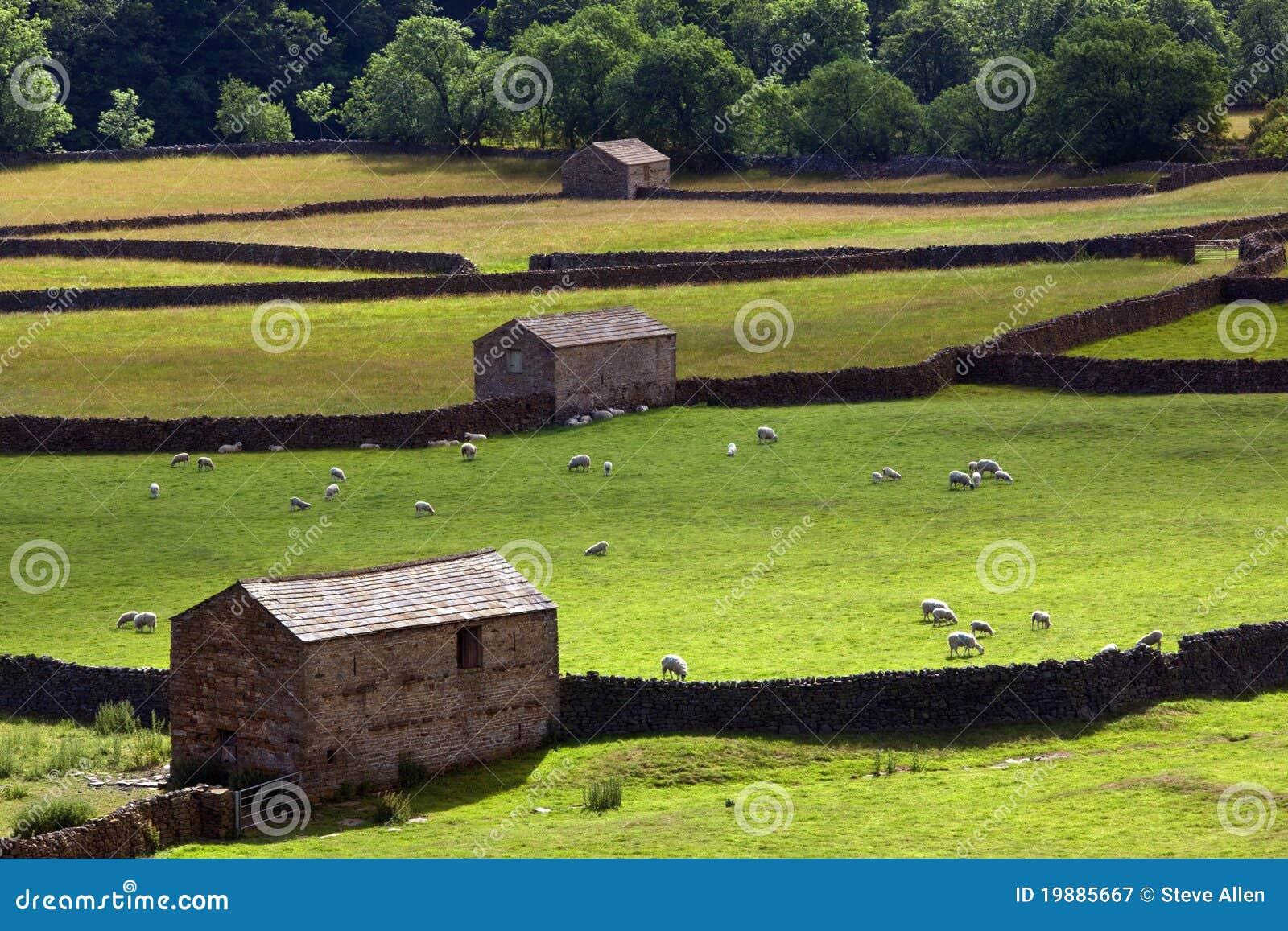 Yorkshire Dales Farmland - England