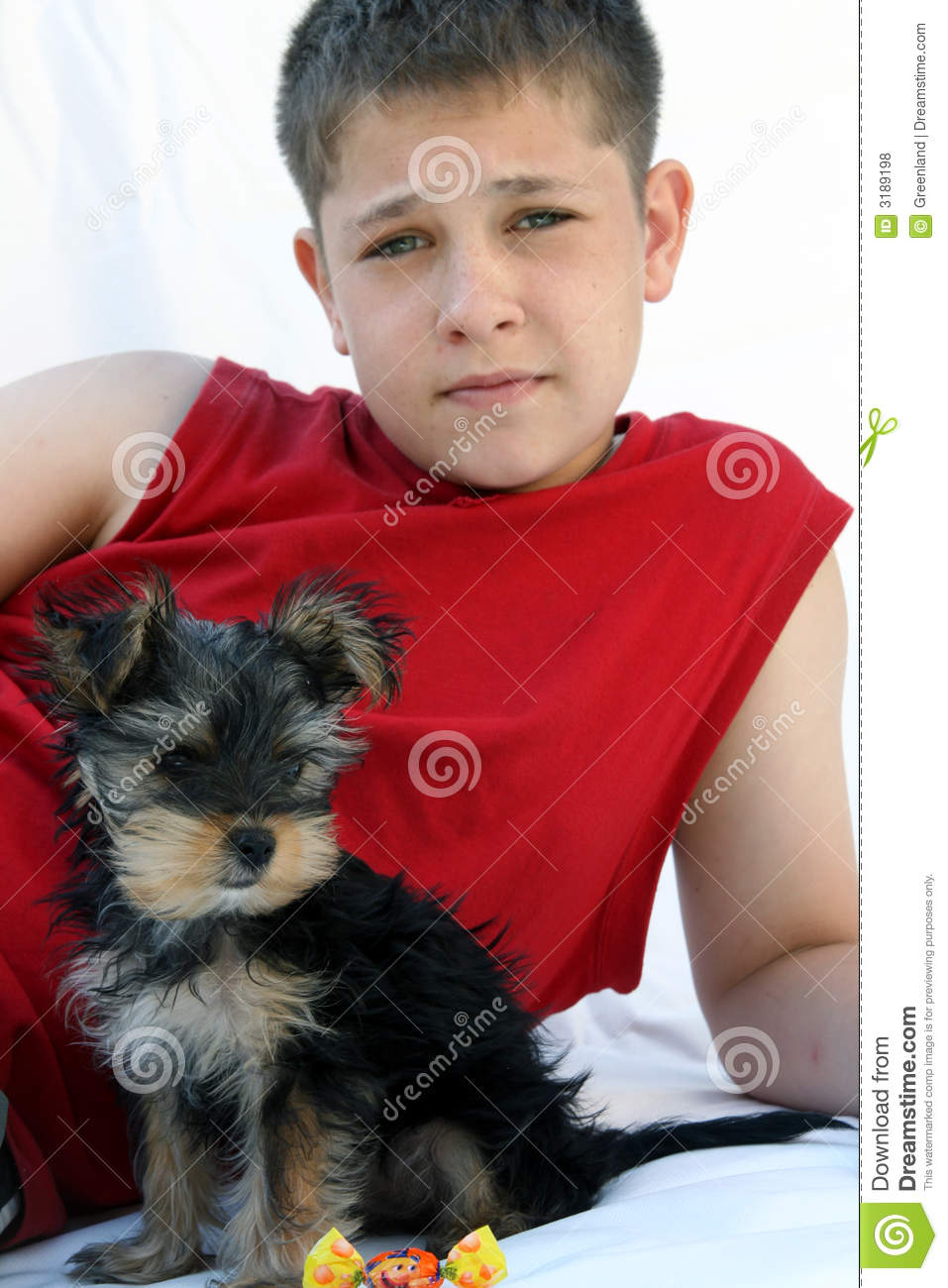 Yorkshire And Owner Stock Photo Image Of Owners Puppy 3189198