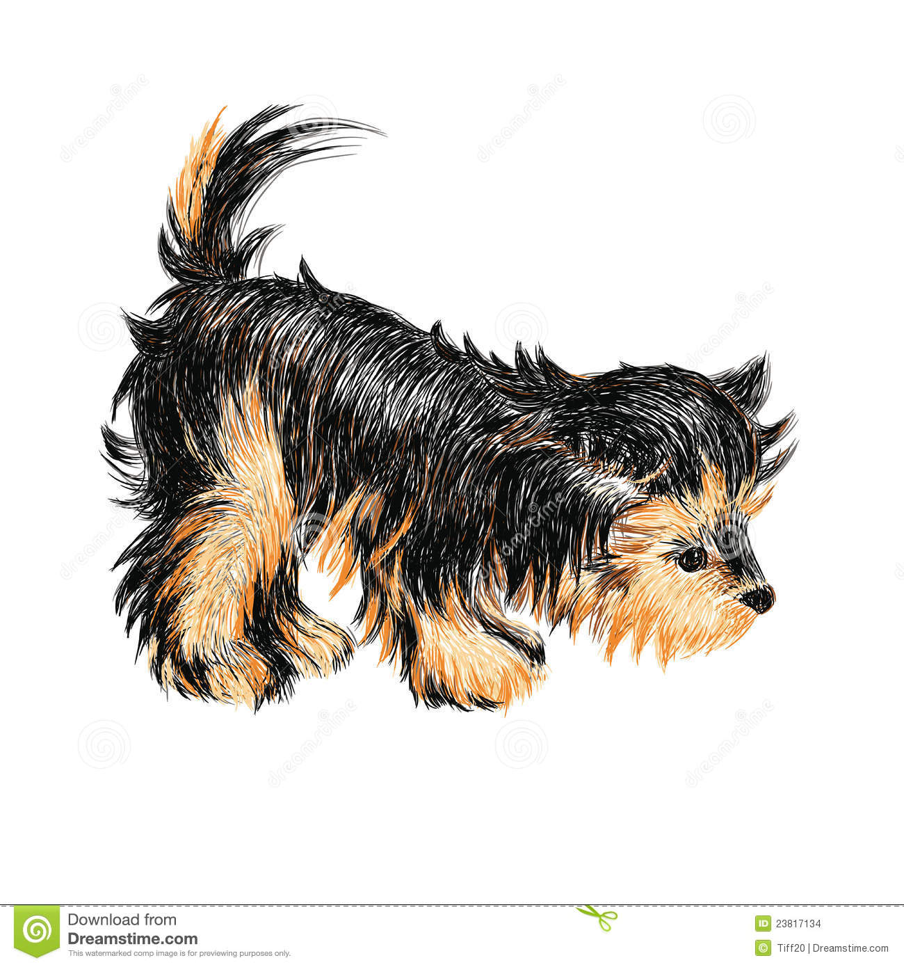 Yorkshire Terrier Stock Vector Illustration Of Funny 23817134