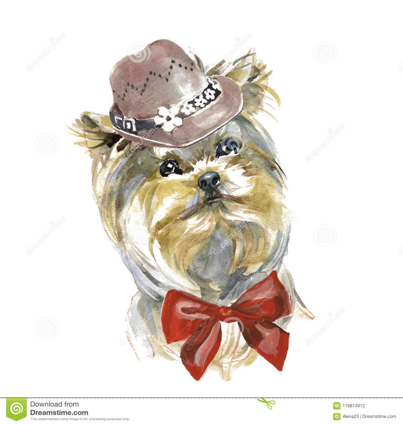 Yorkshire terrier - dipinto a mano, isolato su fondo bianco w