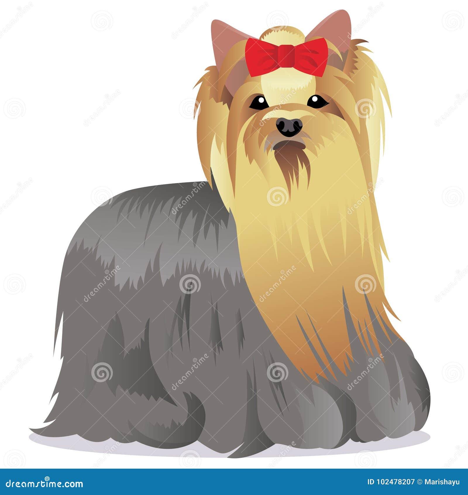 Yorkshire Terrier Dog Stock Vector Illustration Of Illustration