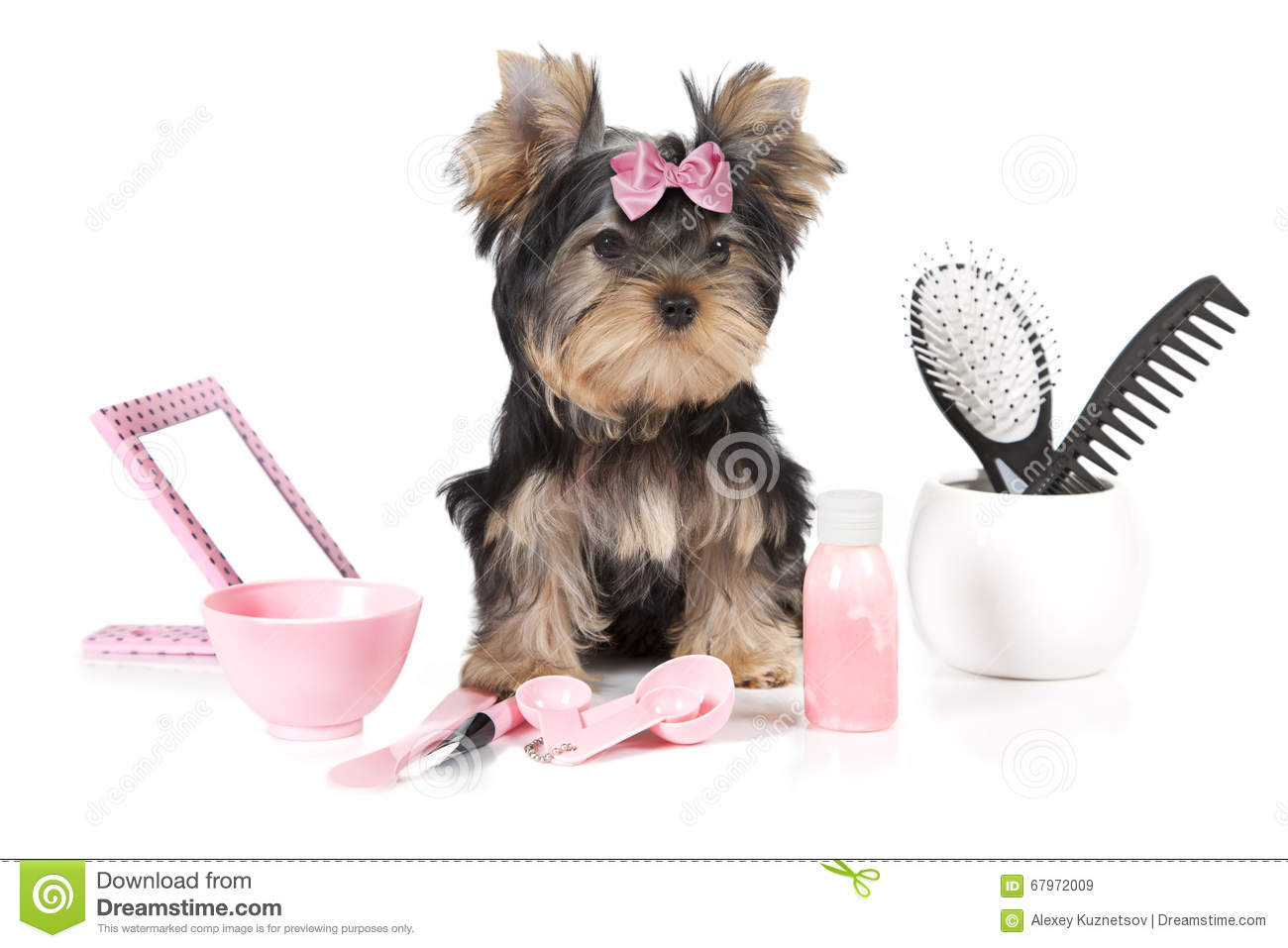 Yorkshire Terrier With Grooming Products Stock Image Image Of