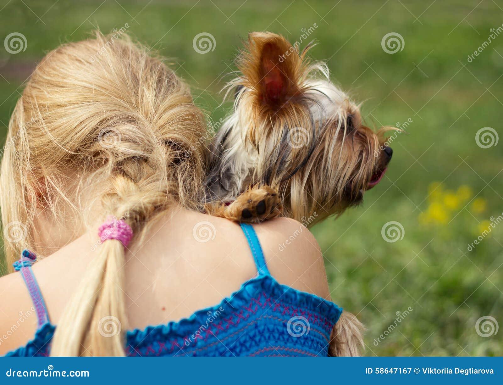 Yorkshire terrier på skuldra av årig flicka 6 se rakt till