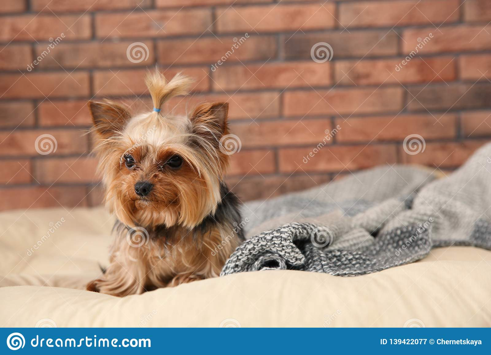 Yorkshire terrier on pet bed against brick wall, space for text.