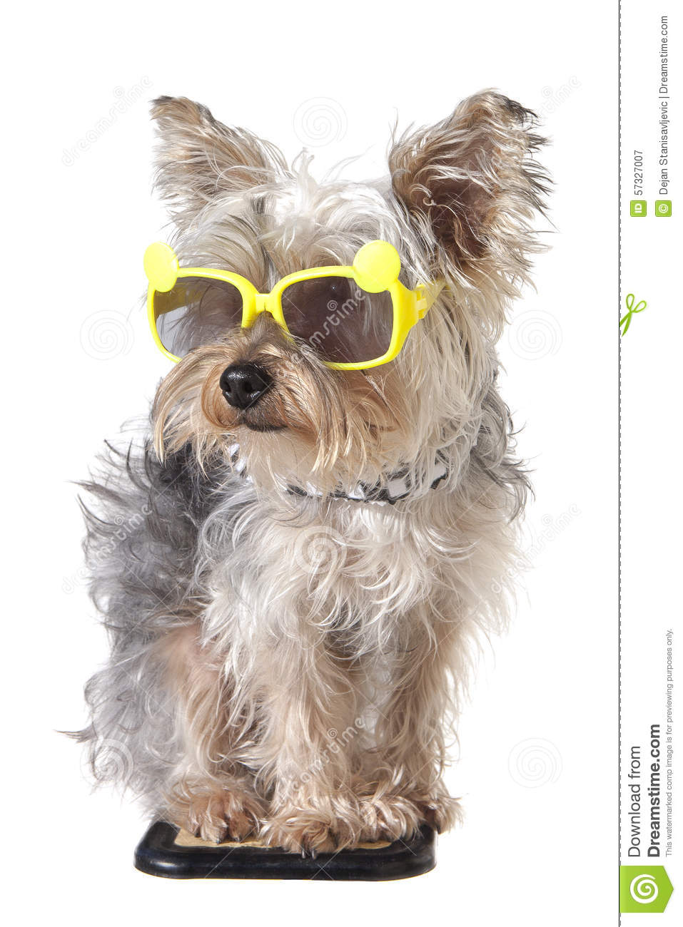 Adorable Puppy With Sunglasses, Isolated On White. Stock ...