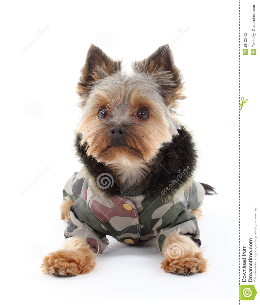 Yorkie Clothes Clothing Accessories And More Yorkie