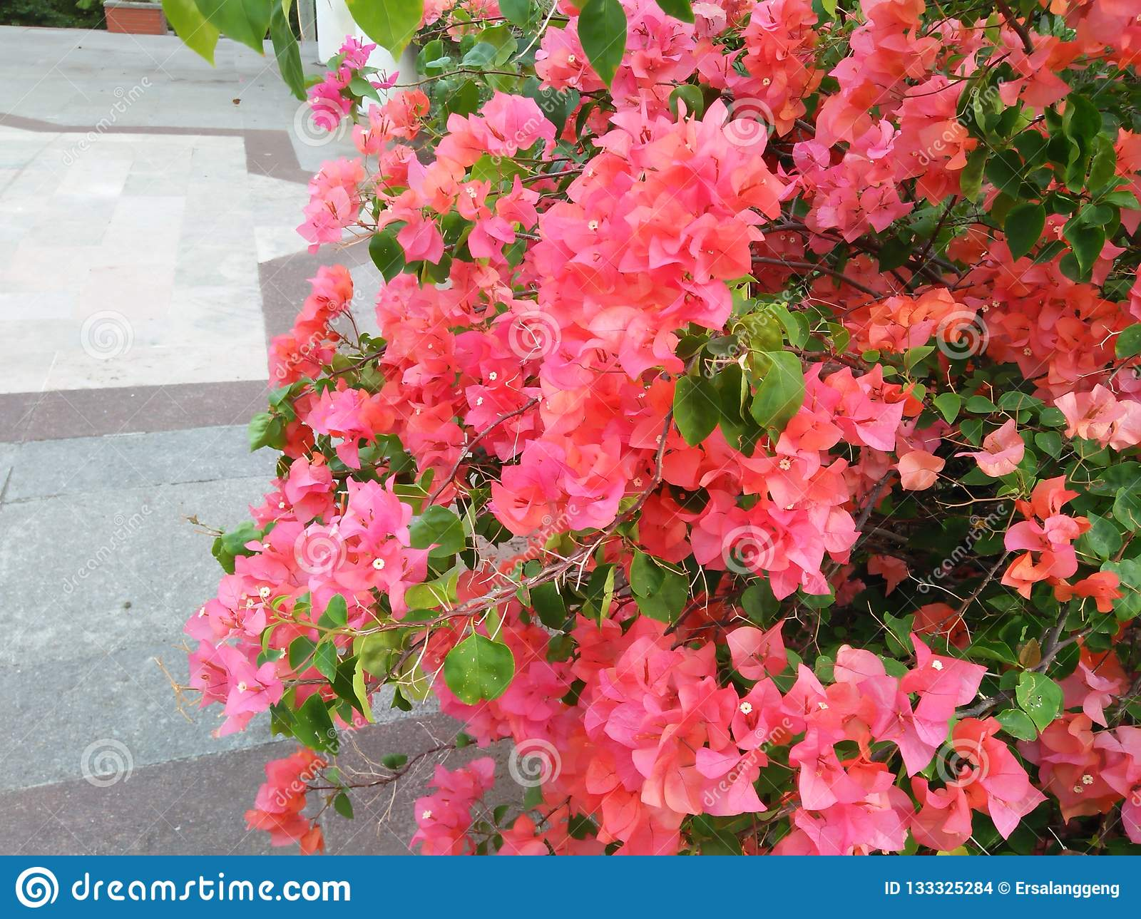 See this flower is very much and charming
