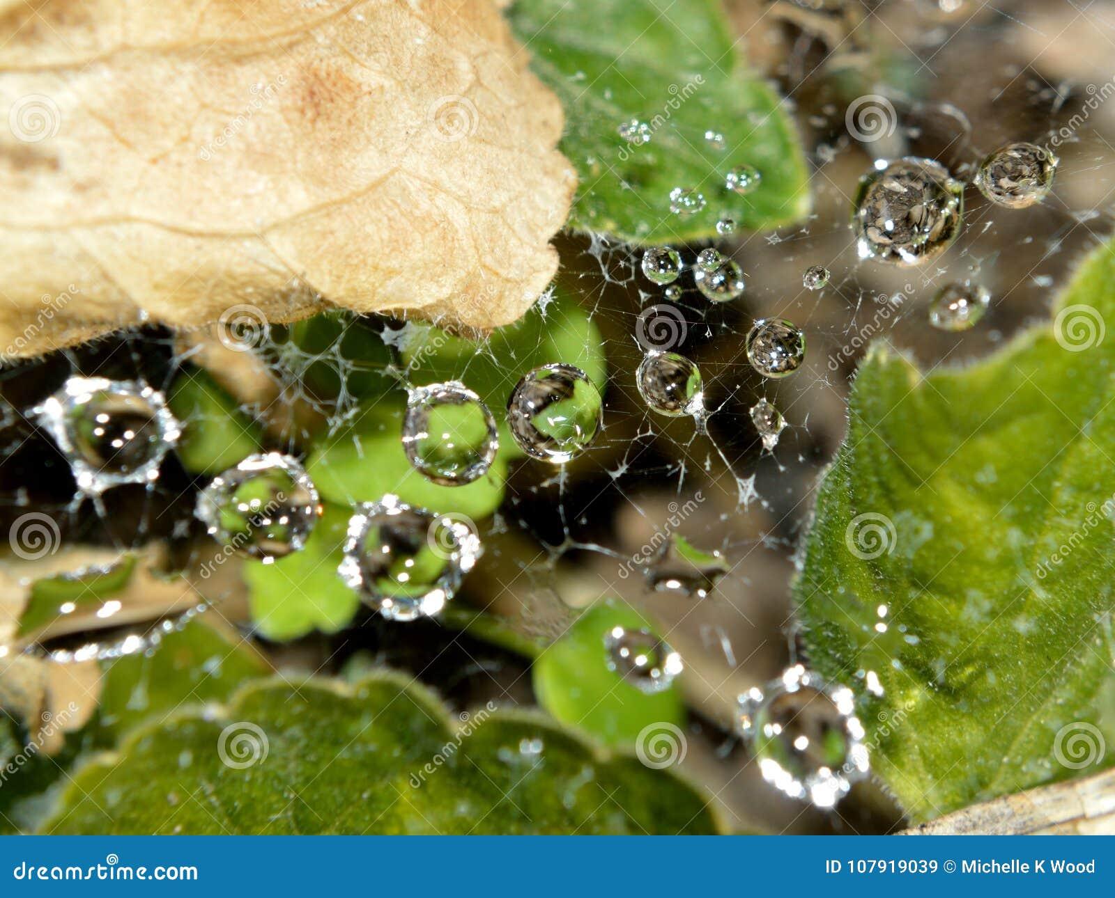 Macro closeup of raindrops in web