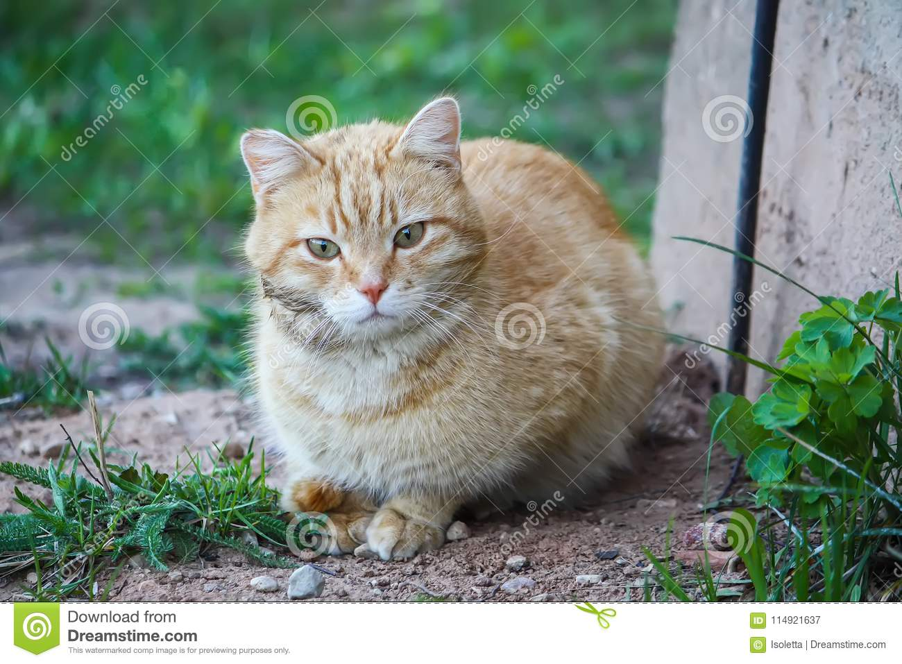 Young active cat with green eyes on summer grass background in a country yard.