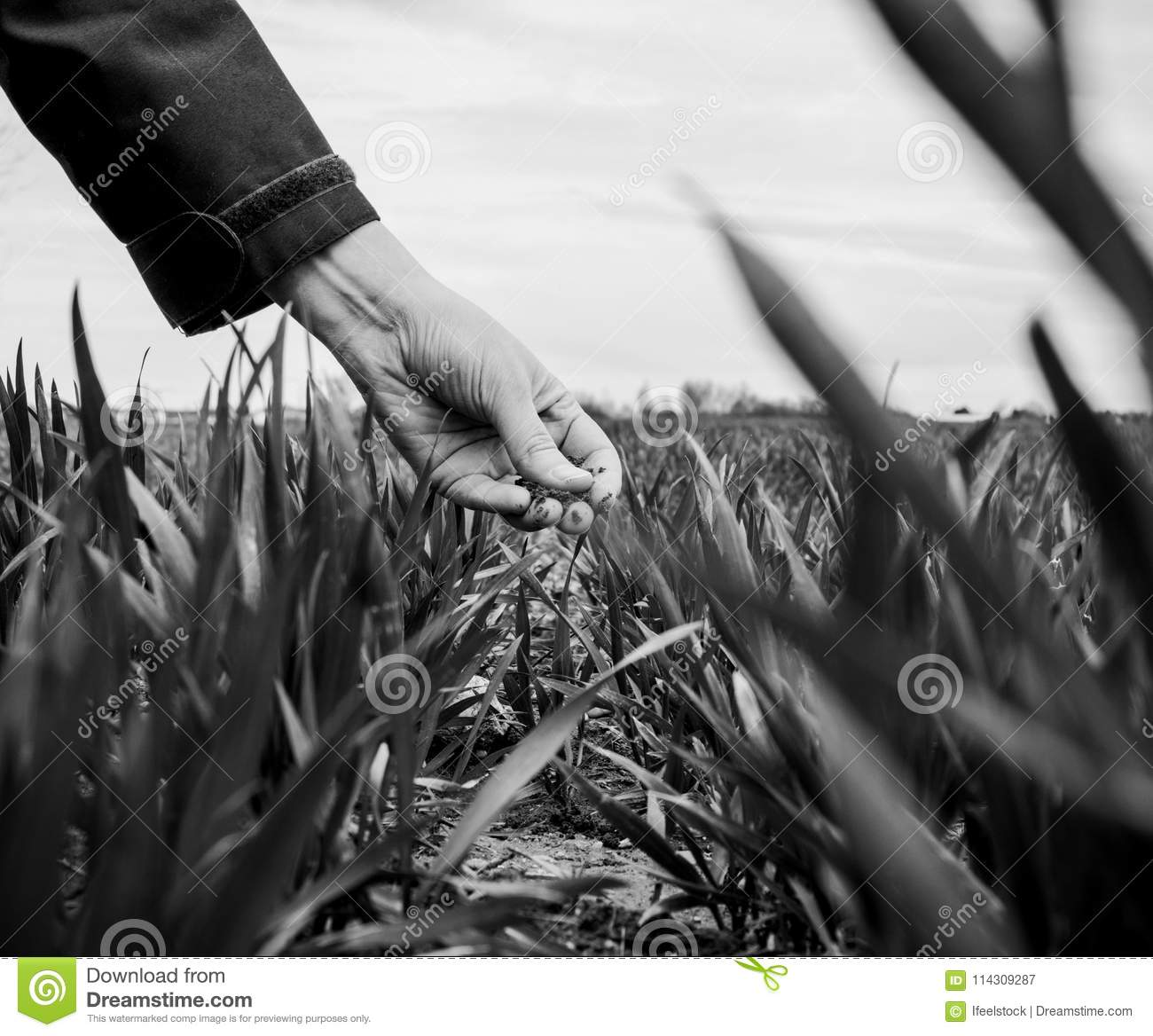 Young agriculture woman biologist inspecting the harvest