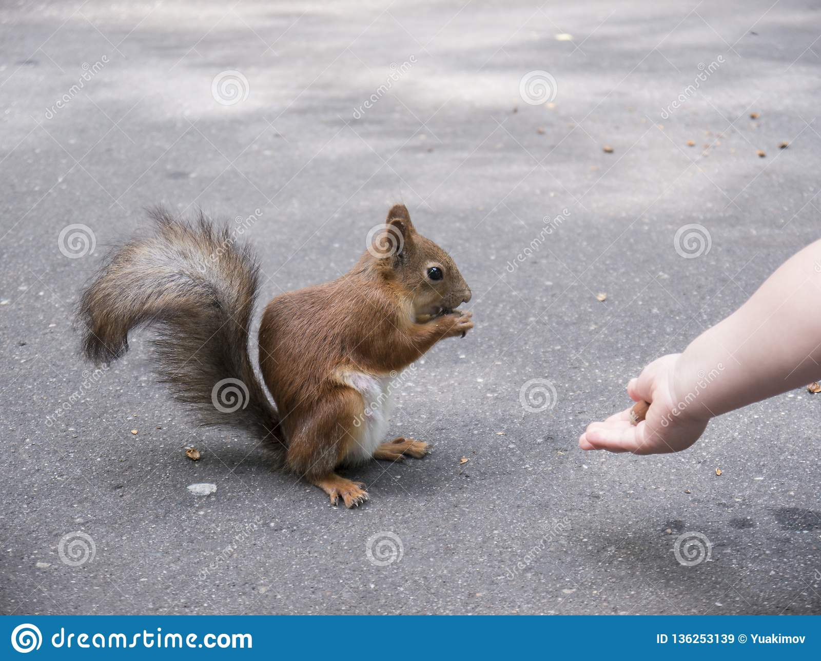 Young baby girl hand with open palm feeding squirrel side view