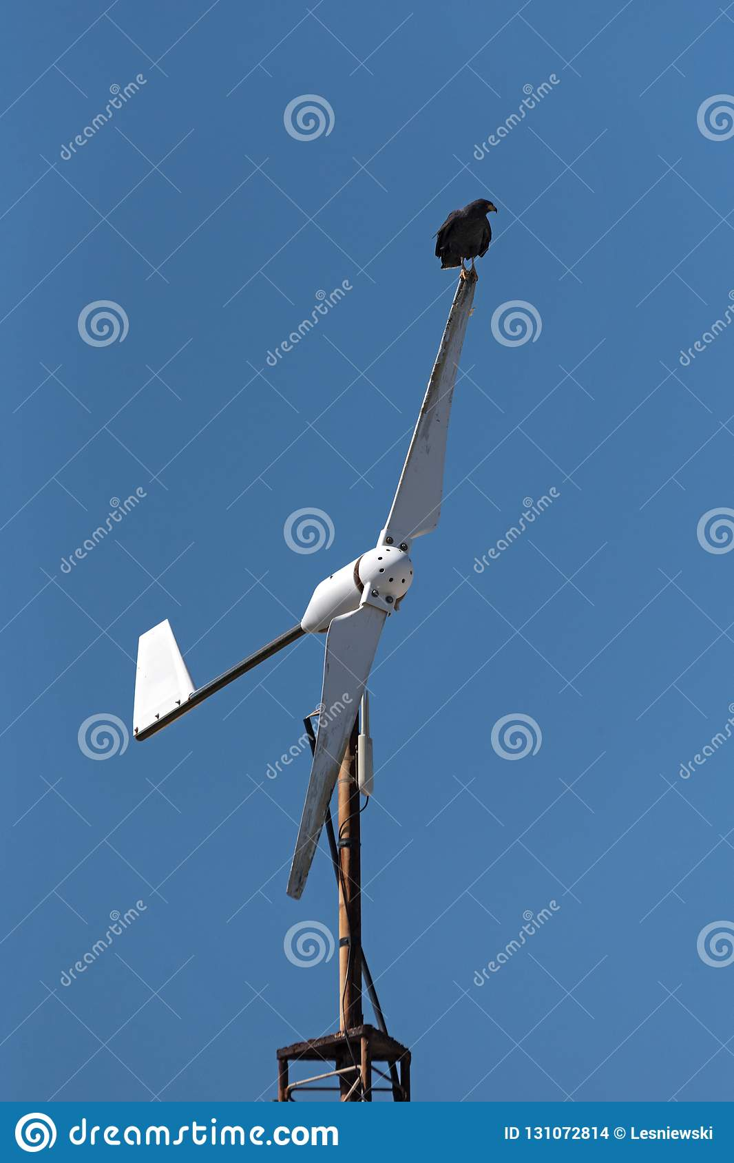 Young Black Accipitriformes Sits On A Rotor Blade Of A Windmill