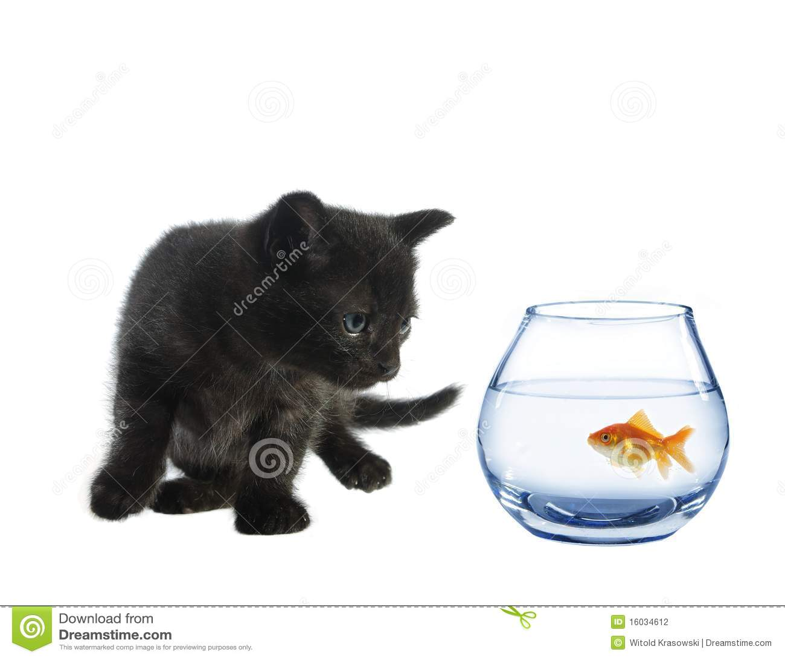 Cartoon Cat Eats Fish Bones
