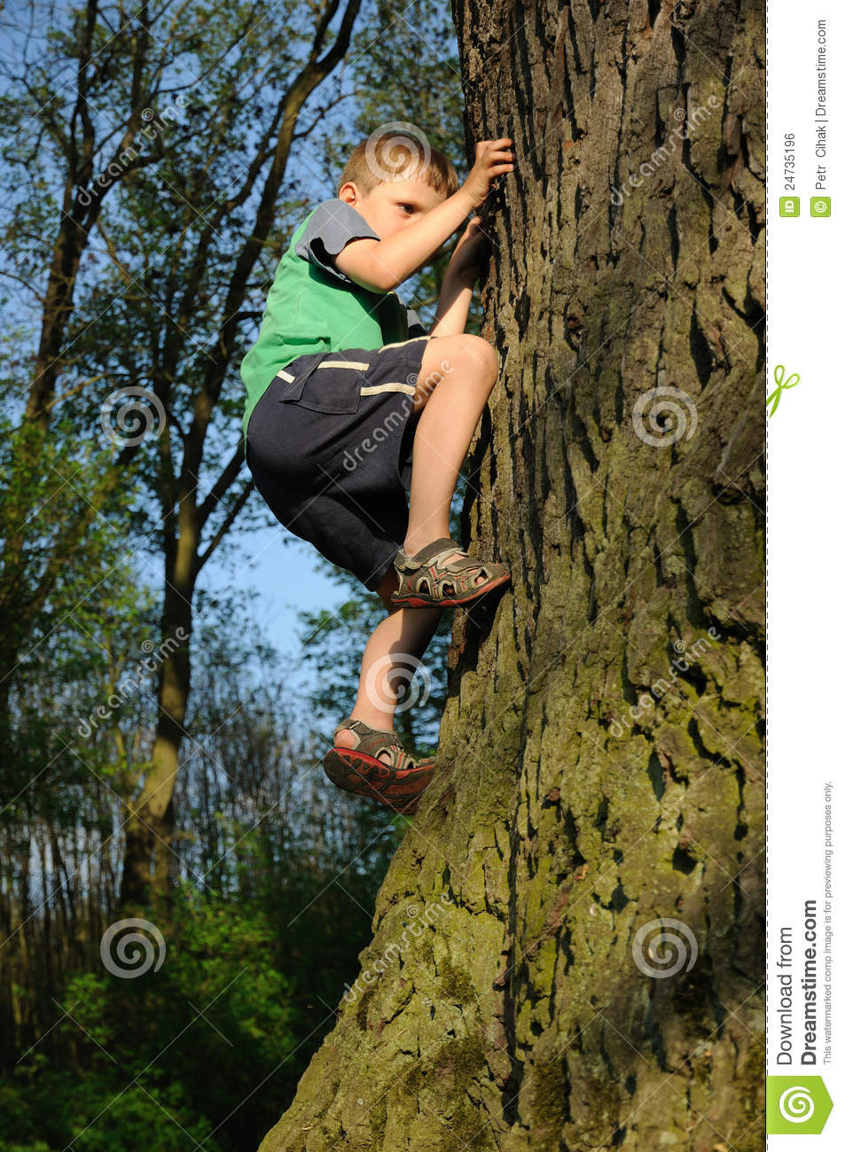 Young Boy Climbing Tree Stock Photo Image Of Preschooler
