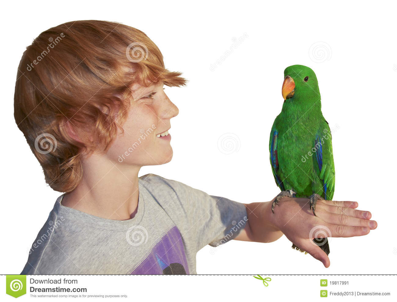Young Boy With Parrot Stock Image Image Of Eclectus