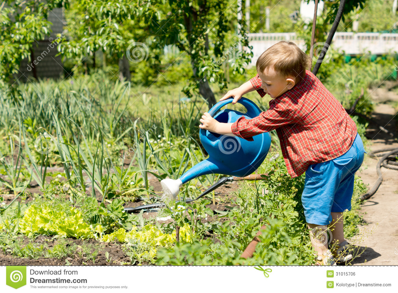 Young boy watering rows of vegetables stock photo image for Watering vegetable garden