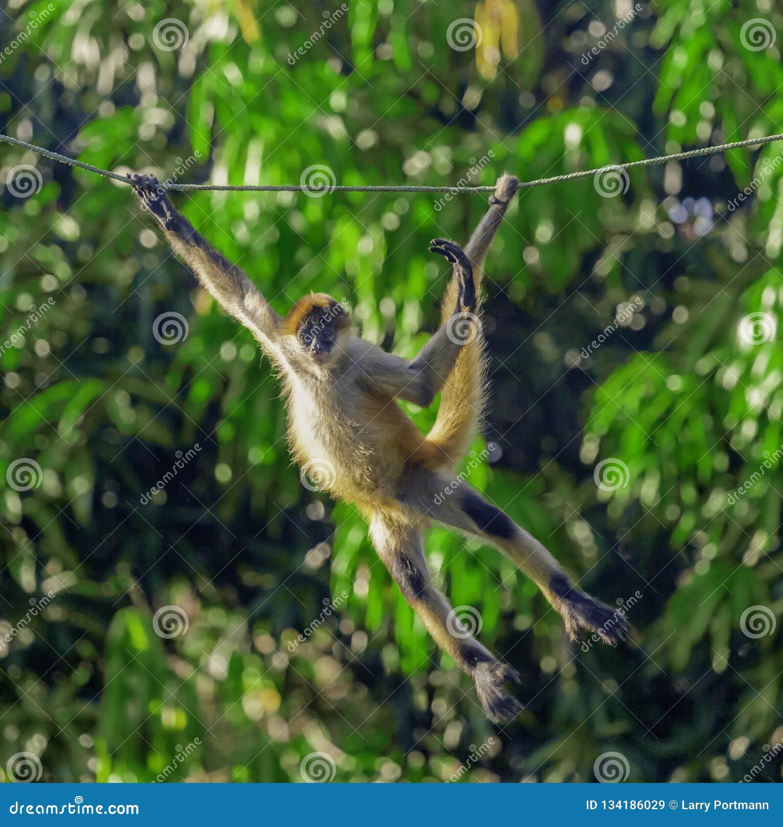 Apologise, monkey picture swinging nice phrase
