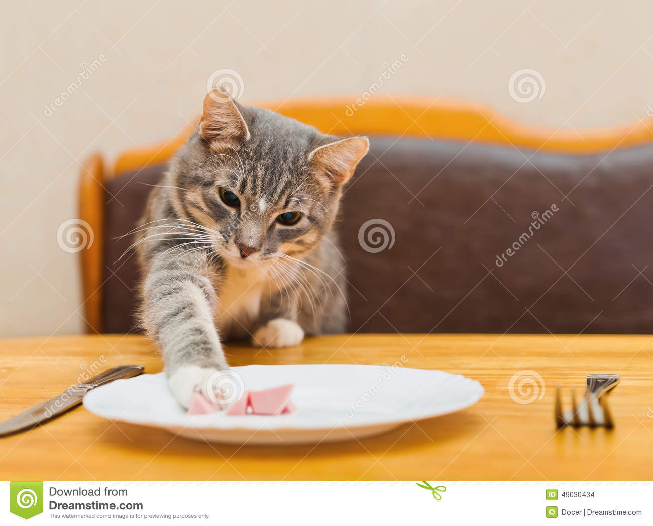 Cat Eating With Cutlery