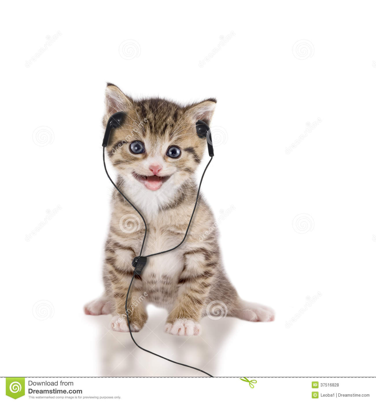 Young Cat Is Listening To Music With Headphones / Headset ...
