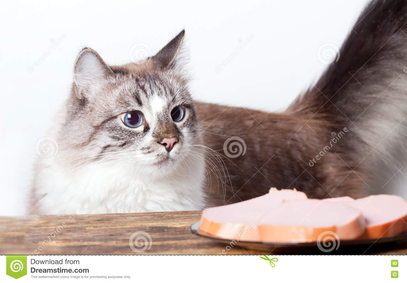 Young cat near the a plate