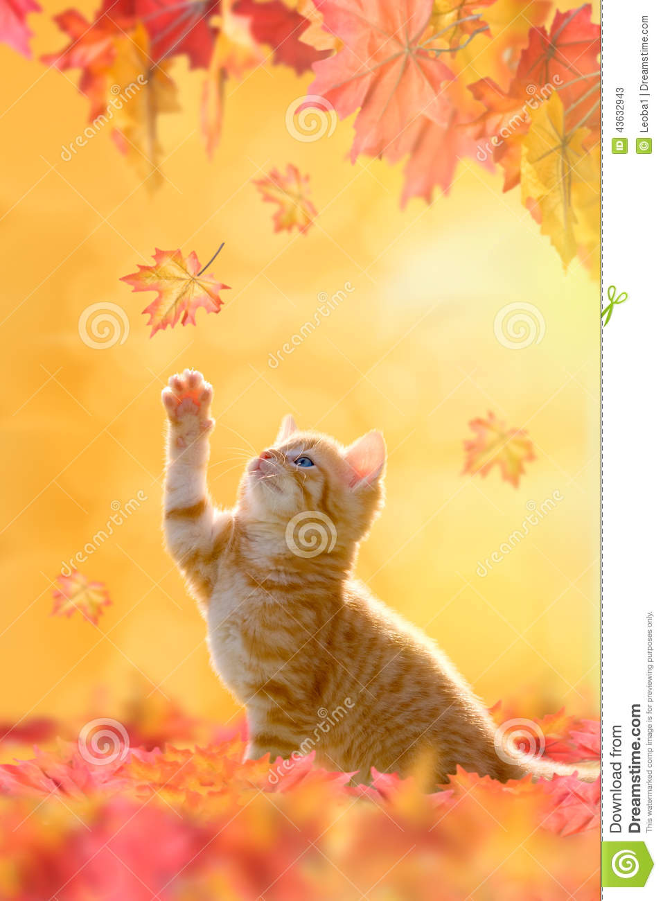 Young Cat Playing In Autumn Leaves Stock Photo Image