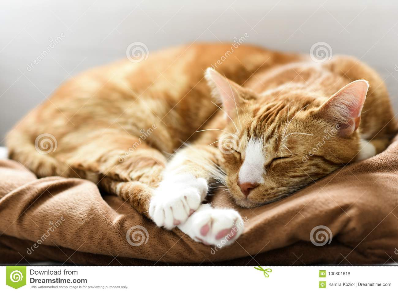 A young cat sleeping on a couch at home, sweet and beautiful.