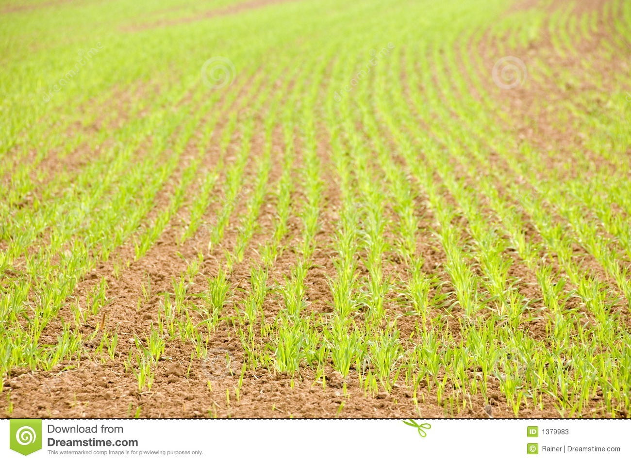 Young crops stock photos image 1379983 for Soil young s modulus