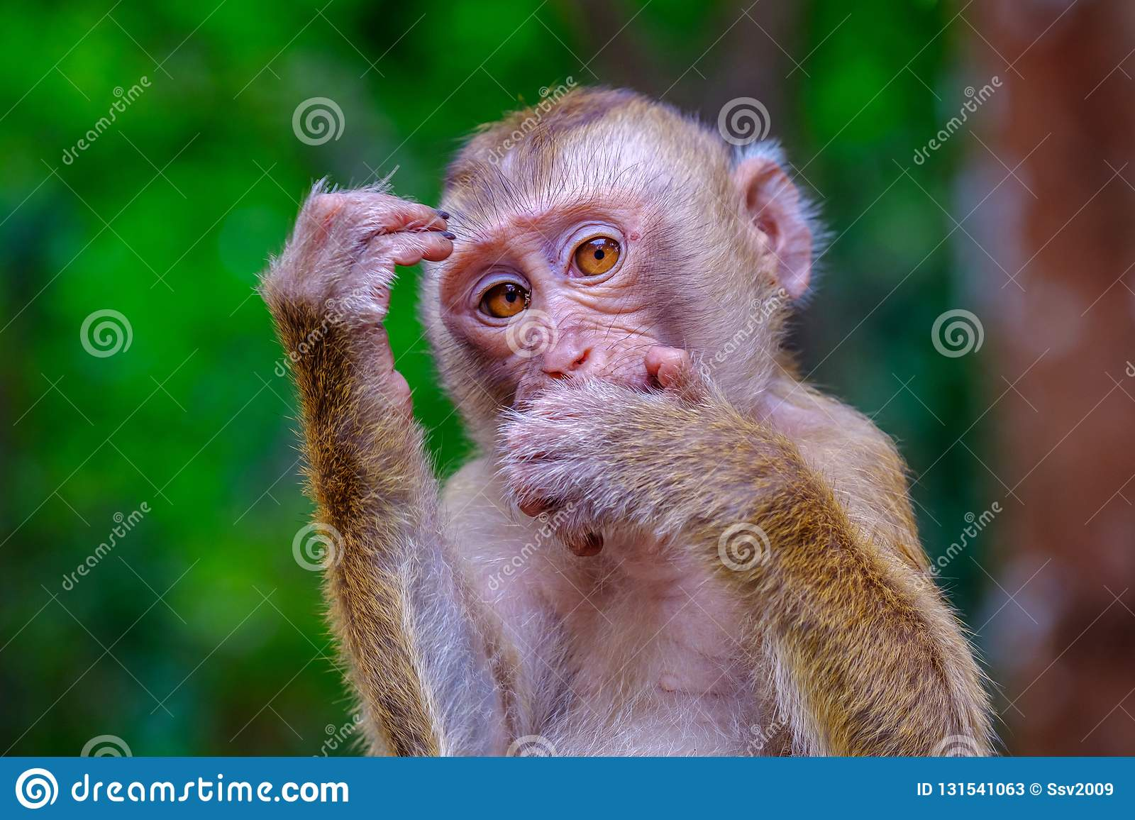 Young cute monkey in the green forest of Thailand. In the pose of a thinker
