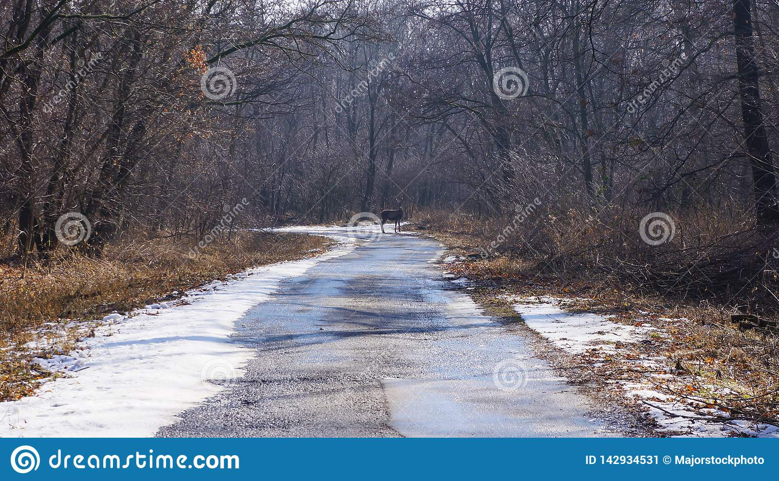 A young deer going through the road