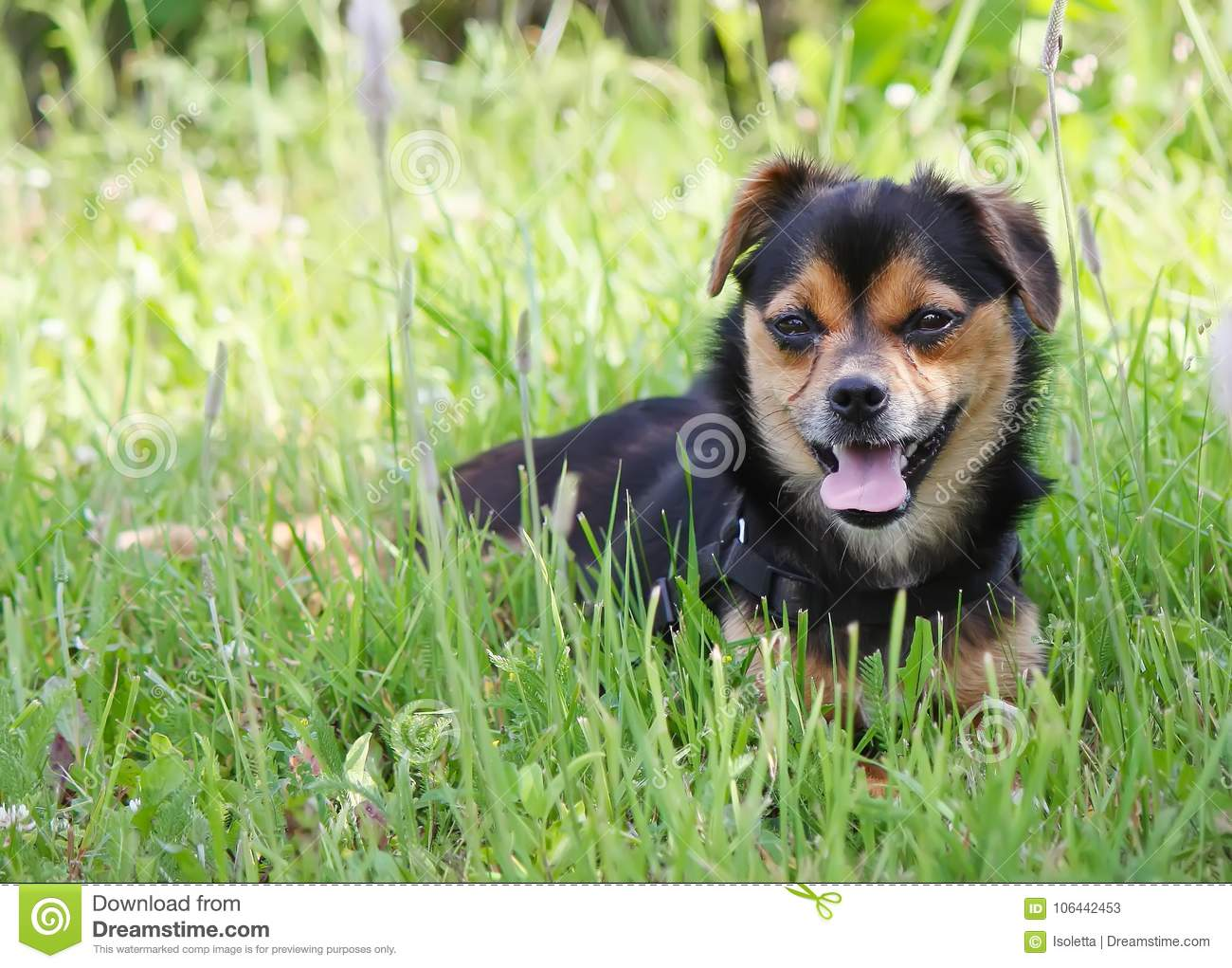 Young dog outdoors on green summer grass background.