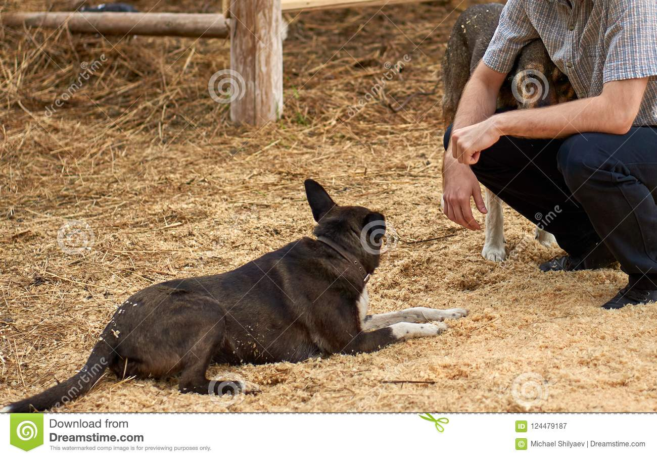 Farmer sitting on the sawdust hugging one of his dogs while another is resting