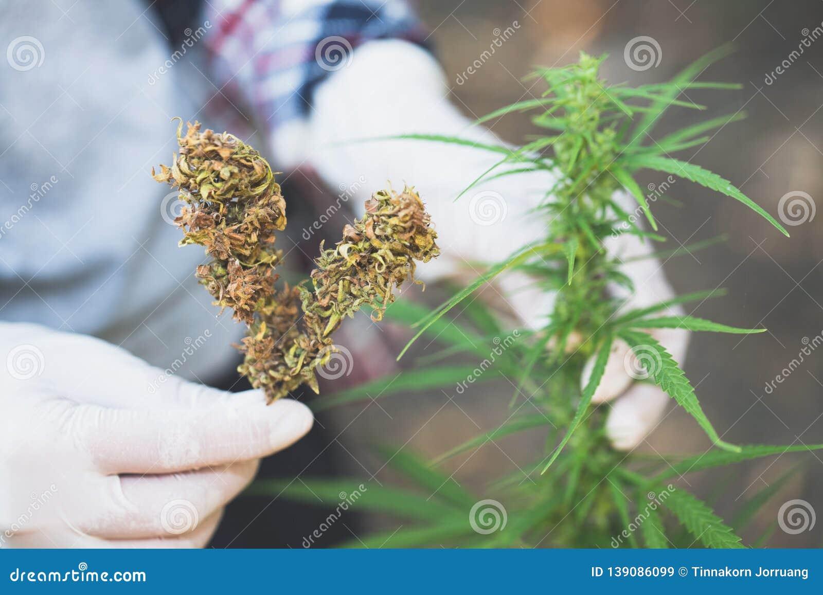 В чем носить марихуану марихуана способ употребления