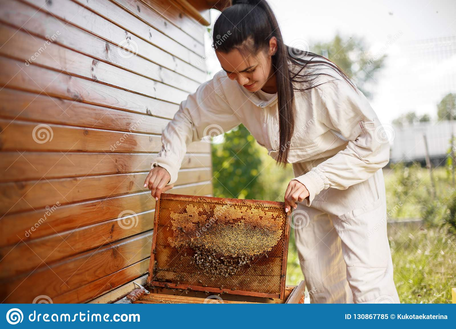 Young female beekeeper pulls out from the hive a wooden frame with honeycomb. Collect honey. Beekeeping concept