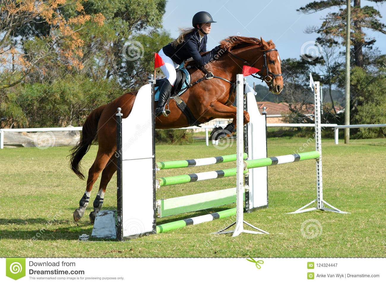 Horse And Rider Show Jumping Stock Image Image Of Horseback Fence 124324447