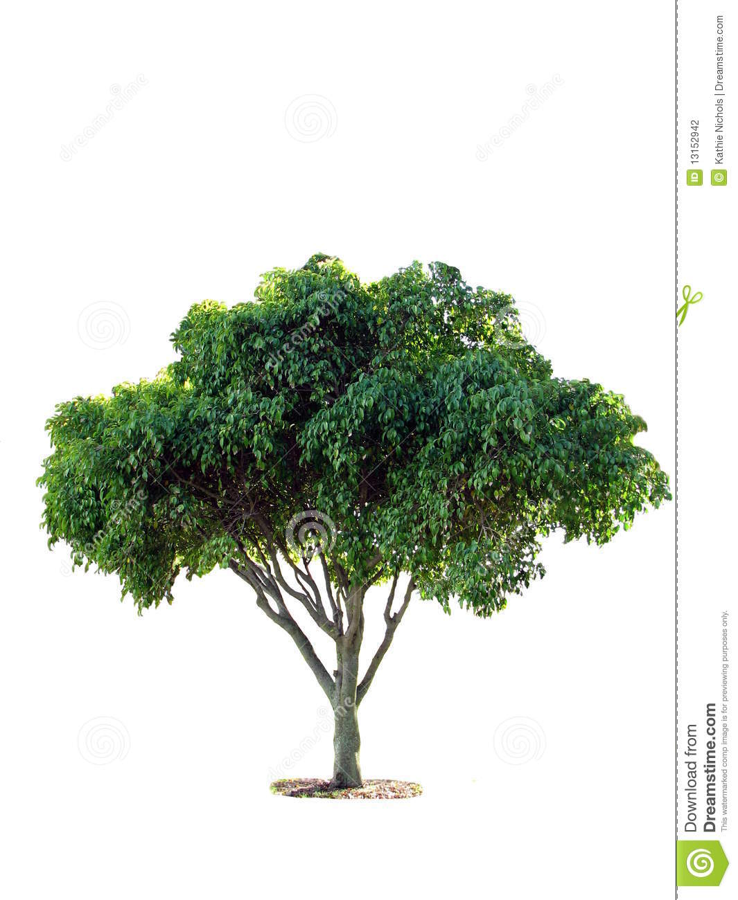 the fig tree people What is the meaning of the parable of the fig tree why did jesus often speak using parables instead of teaching more clearly.